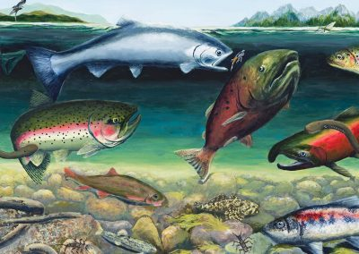 Klamath River Fishes by Deb Van Poolen